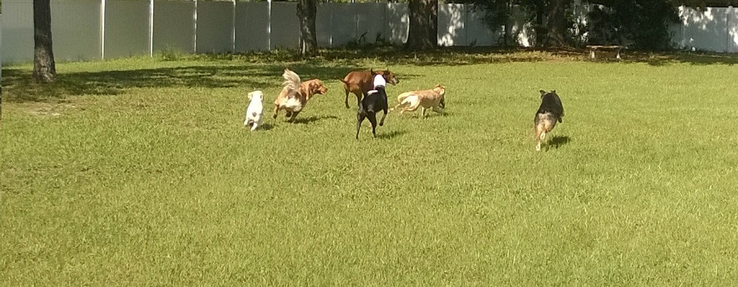Doggie Day Care. Small Groups with a BIG Outdoor Space for Fun!
